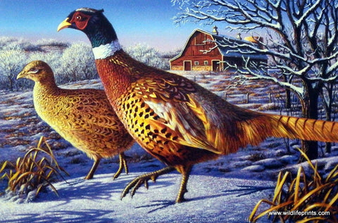 Kim Norlien Frosty Morning Ringnecks