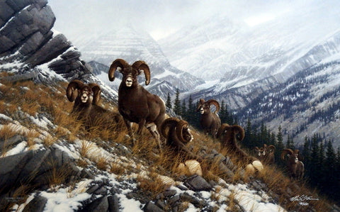 Michael Sieve Glacier Kings- Bighorn Sheep