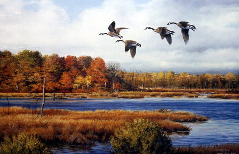 Scott Zoellick Goose Haven