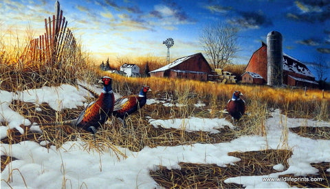 Jim Hansel Harvest Roosters