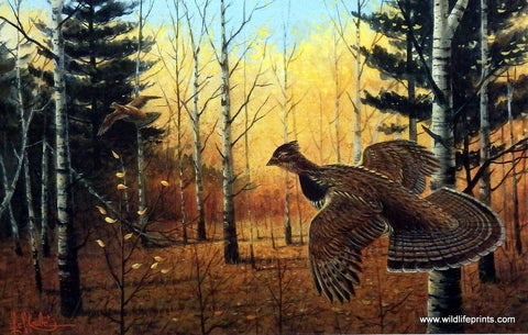 Les Kouba Heartland Grouse