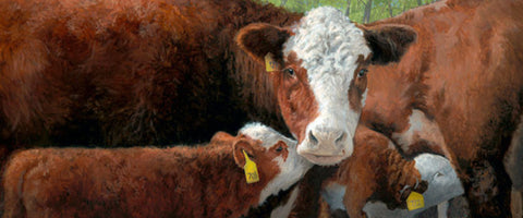 Charles Freitag Feeding Frenzy Cow and Calf Art Print