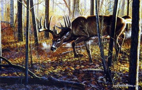Cynthie Fisher Whitetail Deer Picture HOT ON THE TRAIL