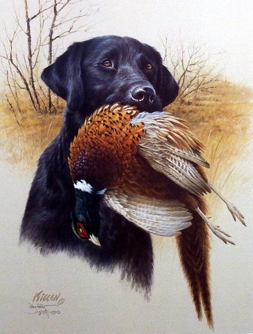 James Killen In The Field- Black Lab & Pheasant