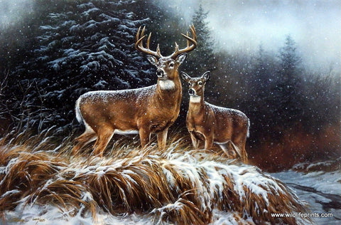 Rosemary Millette In the Storm Whitetail Deer