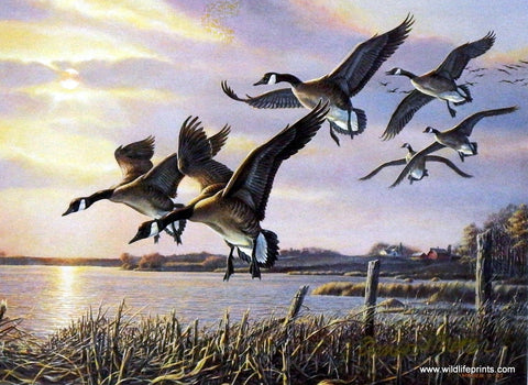 James Meger Interlude Geese