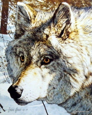 Brian Jarvi Timber Wolf Art Print Intimidation