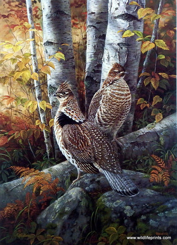 Rosemary Millette Late Season Solitude- Ruffed Grouse