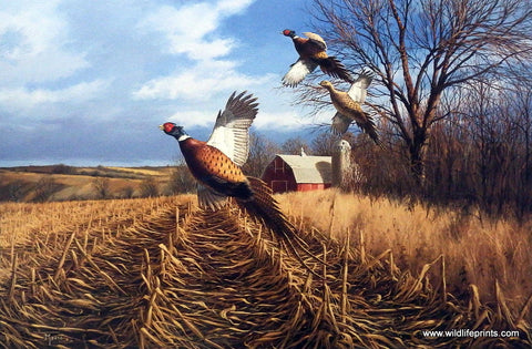 David Maass Late Autumn-Pheasants