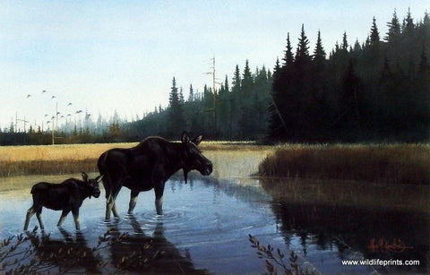 Les Kouba Little Moose Creek