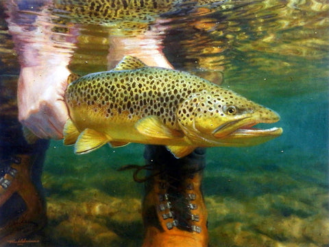 Mark Susinno Live To Fight Another Day- Brown Trout