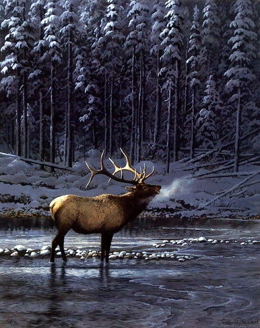 Persis Clayton Weirs Lonesome Bull Elk