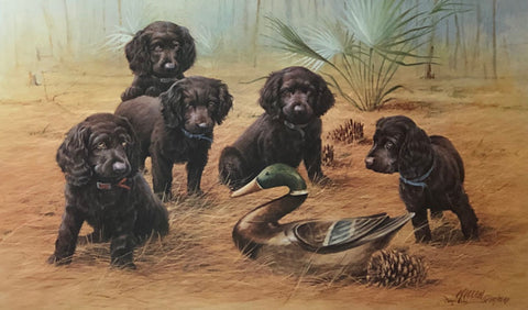 James Killen Low Country Treasures Boykin Spaniels Art Print