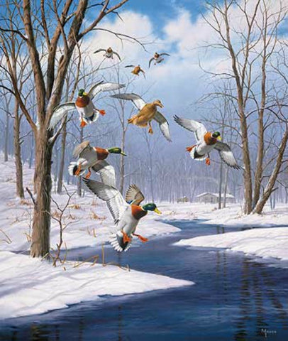 David Maass Winter Wonder Mallards Art Print