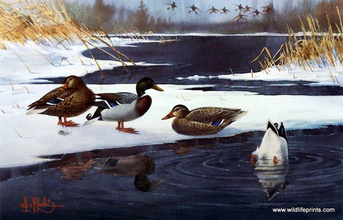 Les Kouba Mallards On Ice