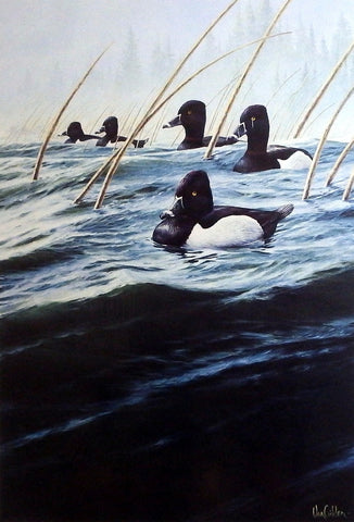 Ron Van Gilder Marsh Mist- Bluebill Ducks