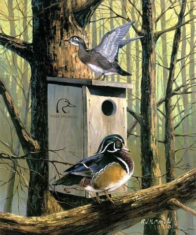 R.J.McDonald Room with a View Wood Duck Print