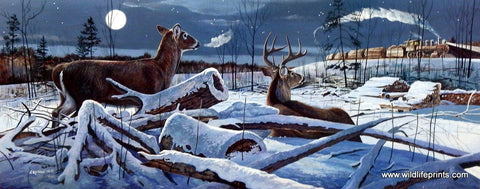 Chris Kuehn Winter Whitetail Deer Picture