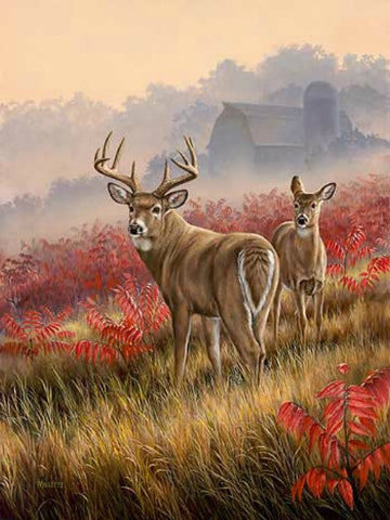 Rosemary Millette Lifting Fog Deer Art Print