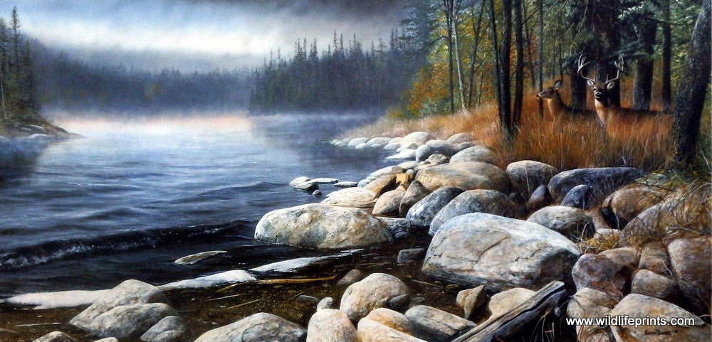 Misty Waters By Kevin Daniel Deer Buck Print Signed and Numbered