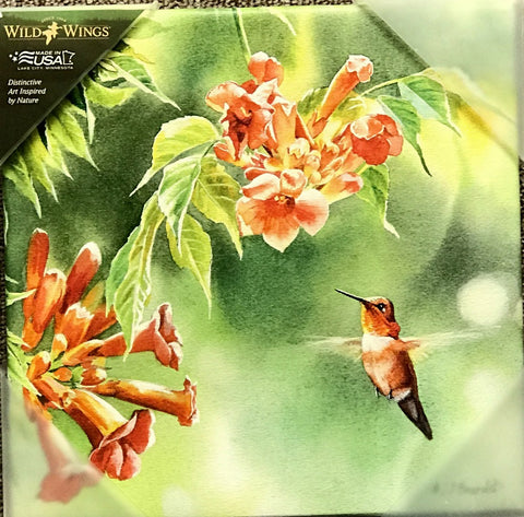 Susan Bourdet Rufous in Trumpet Vine Hummingbird wrapped Canvas