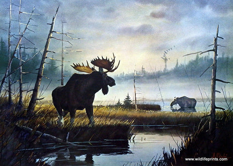 Les Kouba Moose Country
