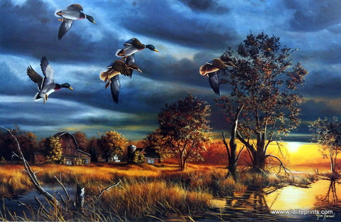 Jim Hansel Morning Mallards