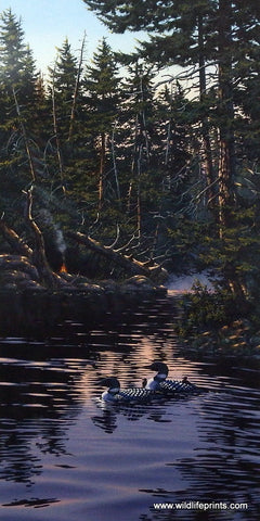 Derk Hansen Morning Reflections (loon family)