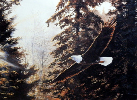 Andrew Kiss Eagle Print MYSTIC FLIGHT