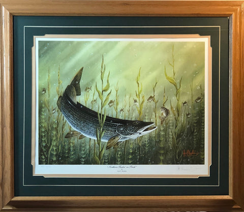 Les Kouba Northern Feedin On Perch S/N Fishing Art Print-Framed