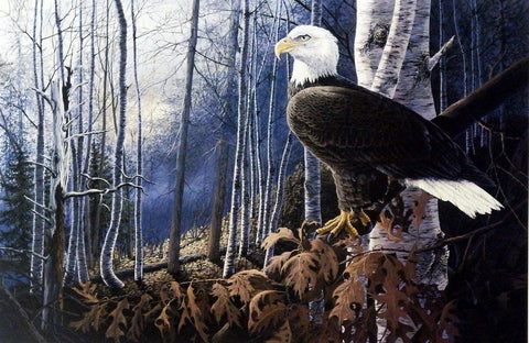 Don Blakney Bald Eagle in Birch Tree Art Print