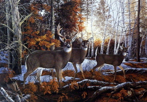 Don Blakney Wildlife print with whitetail deer including a buck