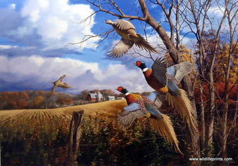 David Maass October Memories-Pheasants