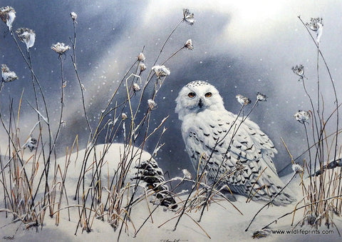 Susan Bourdet On the North Wind- Snowy Owl