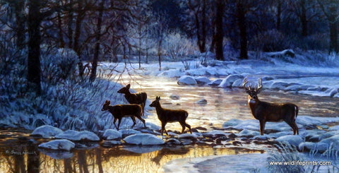 Bruce Miller Whitetail Deer Buck Print ON THE RIVER