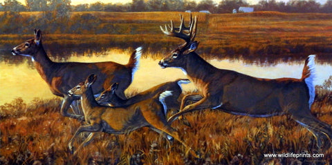 Bruce Miller Whitetail Deer Wildlife Print ON THE RUN
