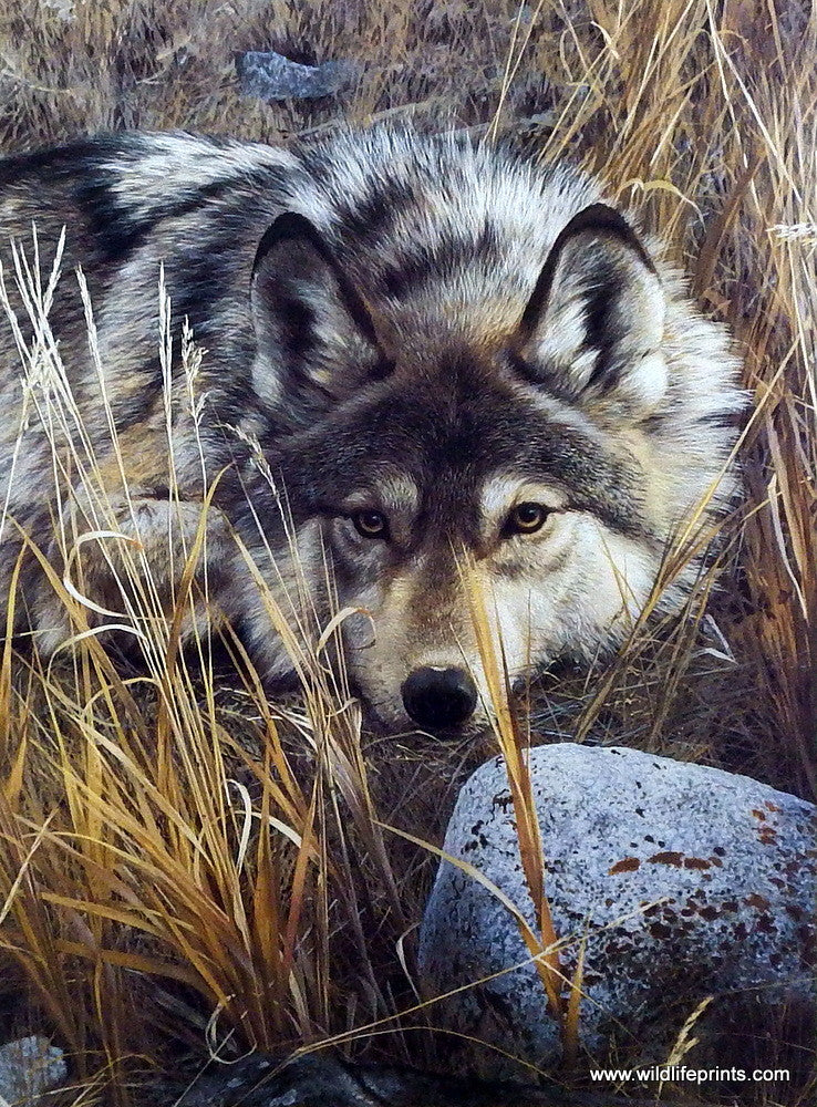 Wildlife Artist Carl Brenders Unframed Wolf Print One To