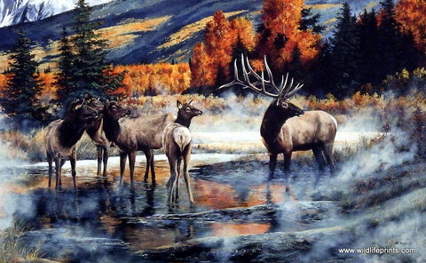 Andrew Kiss Elk Print Out of the Mist
