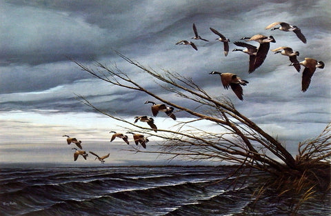 Terry Redlin Canadian Geese print OVER THE BLOWDOWN