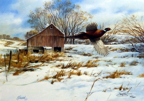 James Killen Pheasant Country
