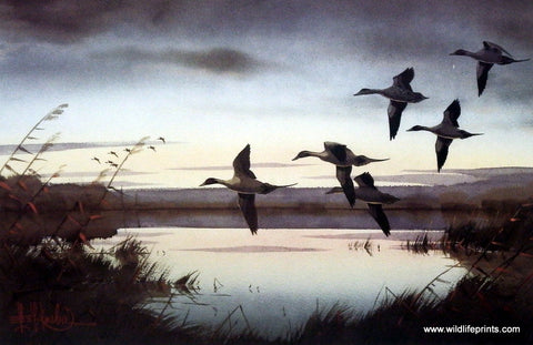 Les Kouba Pintails To Rest