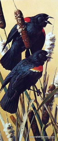 Carl Brenders bird print red-winged blackbird on cattails