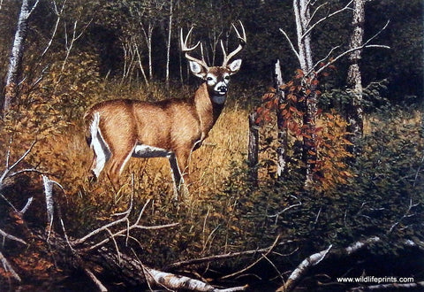 Richard Plasschaert River Bottom Buck