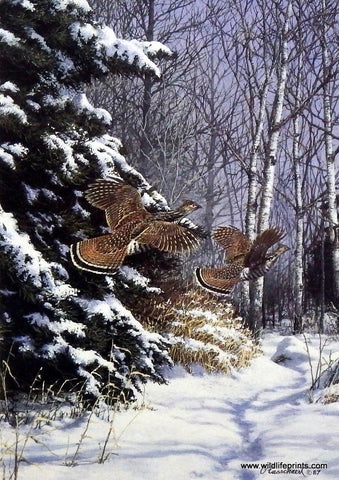 Richard Plasschaert Ruffed Grouse