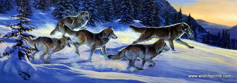 Al Agnew Wolf Pack Wildlife Art Print