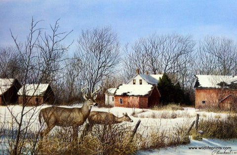 Richard Plasschaert Season's End- Whitetail Deer