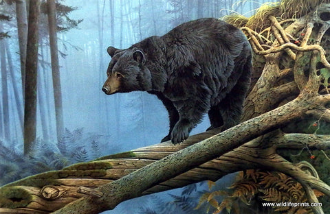 Bear Art Wildlifeprints Com