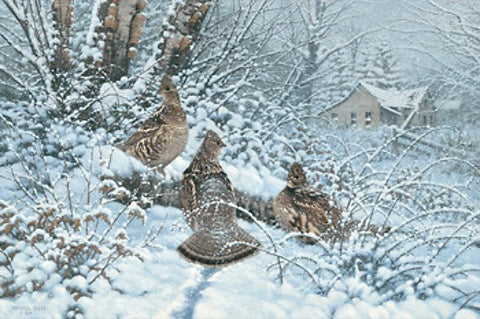 Sieve Hunkered Down Ruffed Grouse S/N Print