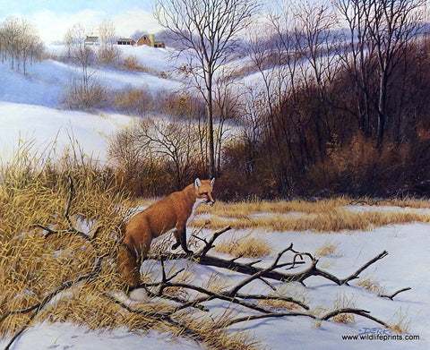 Derk Hansen Red Fox Wildlife Print