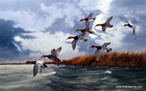 David Maass Silver Bullets-Canvasbacks